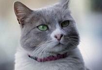 filmovi o tinejdžerskim mačkama